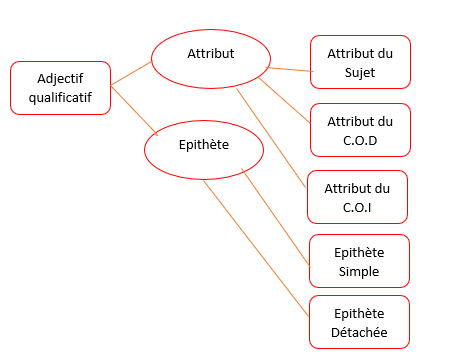 L'ADJECTIF QUALIFICATIF (SUITE) - Leçons